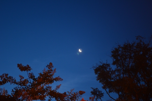 Coastal Georgia Crescent Moon