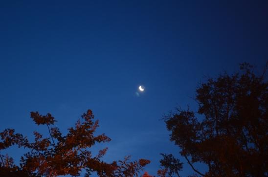 Coastal Georgia Crescent Moon