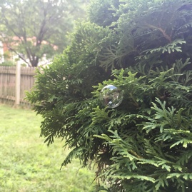 Bubble in evergreen.