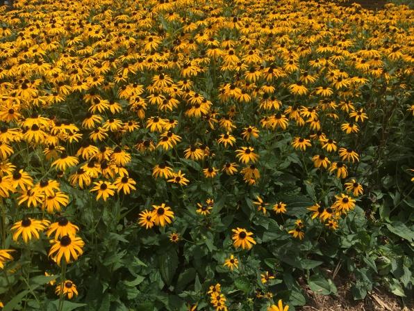 Rest Area Flowers
